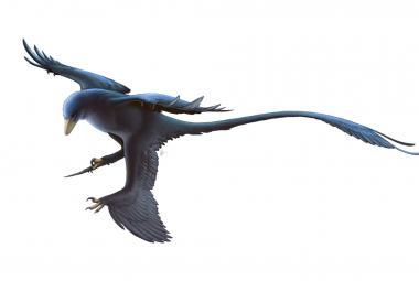 První lupy na Zemi. Paleontologové je našli u 125 milionů let starého dinosaura