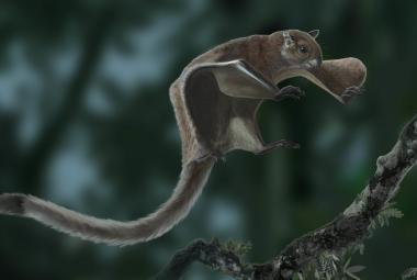 Vědci objevili nejstarší veverku, která se mohla vznést do vzduchu. Žila v Evropě