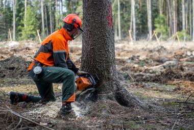 Změna v těžbě dřeva i zalesňovací vyhláška. Ministerstvo chystá tažení proti kůrovcové kalamitě