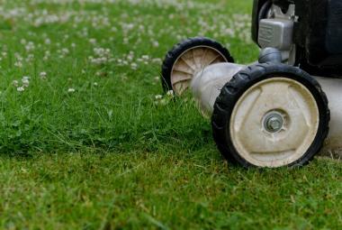Biolog: Když omezíme sekání trávy, efekt bude okamžitý. Teď mizí hmyz i ptáci