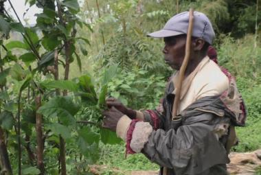 Pygmeje v Ugandě před dekádami vyhnali z pralesa. Teď se tam vracejí jako průvodci turistů