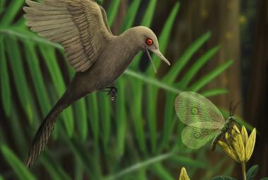 Vědci objevili vůbec nejmenšího dinosaura. Byl velký jako dnešní kolibřík