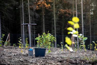 Za koronavirové krize sázet stromy. Lesy ČR nabízejí brigádu v době zavření škol