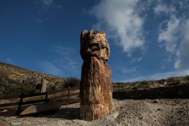 Vědci na Lesbu objevili zkamenělý strom starý 20 milionů let. Byl částí velkého pravěkého lesa