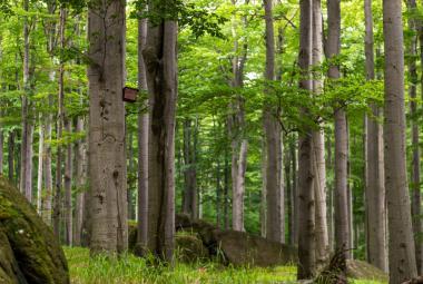 Bučiny v Jizerských horách se staly první českou přírodní památkou na seznamu UNESCO