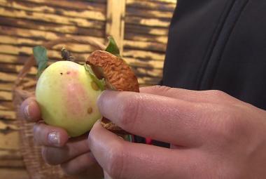 Z jablek křížaly. Obce se vrací k tradici sušáren