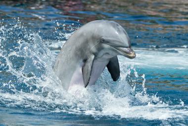 """Delfíni na sebe """"hvízdají"""" jménem"""