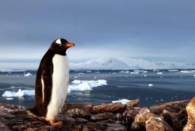 Na Antarktidě ledovců neubývá, naopak, zjistili čeští polárníci