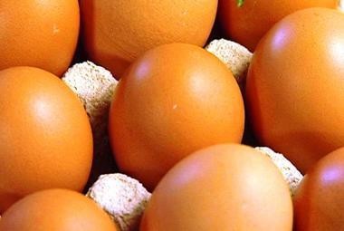 Obchodní řetězce přestanou do šesti let prodávat vejce od slepic z klecových chovů