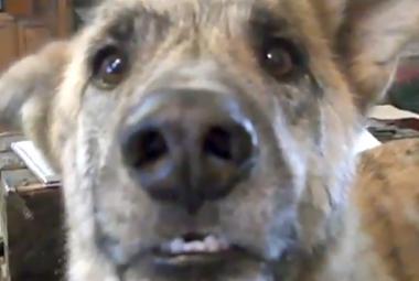První pes, který žil s lidmi jako přítel. Archeologové našli důkaz kousek od českých hranic