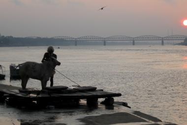 Svatý muž omývá krávu na břehu Gangy