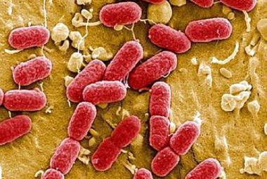 Dvanáct jezdců bakteriální apokalypsy. Proti těmto mikroorganismům selhávají antibiotika
