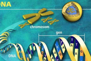Genetické změny v roce 2017: zázračný CRISPR posunul hranice medicíny