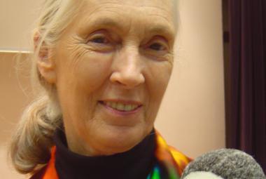 Narozeniny slaví uznávaná zooložka Jane Goodallová