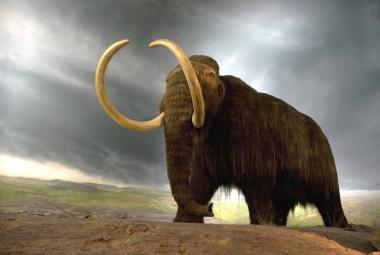 Japonští vědci oživili buňky z 28 tisíc let mrtvého mamuta. Návrat obrů se zatím neplánuje