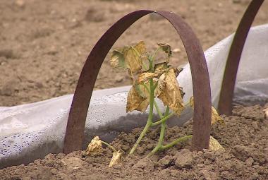Vláda se připravuje na sucho. Chystá dotace a stavbu přehrad