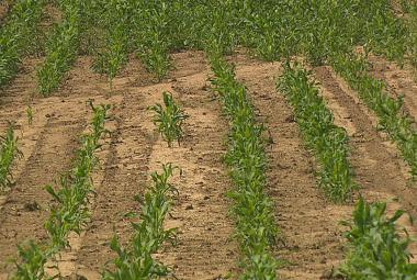 Vodní eroze ohrožuje polovinu českých zemědělských ploch
