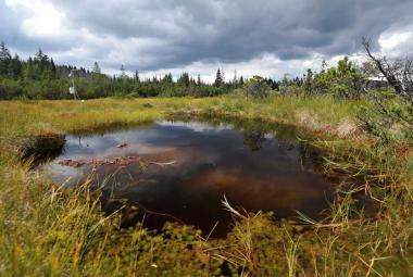 Poslanci přehlasovali prezidenta, národní parky mají nová pravidla