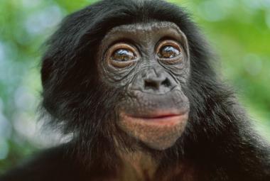 Satelity NASA zachraňují šimpanze. Astronomové spolupracují s Jane Goodallovou