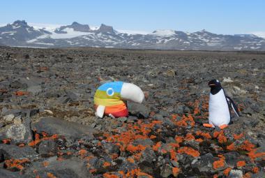 Česká antarktická expedice našla zajímavé lišejníky, zaznamenala nejteplejší počasí