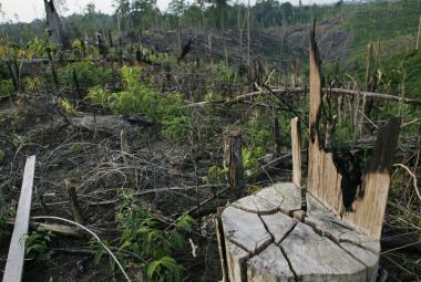 Naše civilizace je závislá na palmovém oleji. Šetří náklady, ale přináší i problémy
