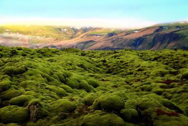 Antarktida: zelený, nikoliv bílý světadíl. Klimatická změna přebarvuje kontinent