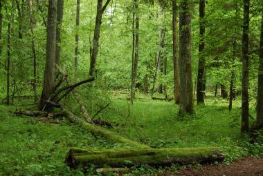Polsko i přes nařízení evropského soudu bude pokračovat s kácením v Bělověžském pralese