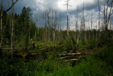 Soud EU hrozí Polsku: Za každý den kácení v Bělověžském pralese zaplatíte 100 tisíc eur