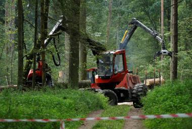Je to v zájmu pralesa. Kácíme kvůli kůrovci, trvá na svém polská vláda