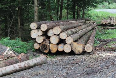 S přebytkem českého dřeva pomůže Čína. Ceny by mohly opět začít růst