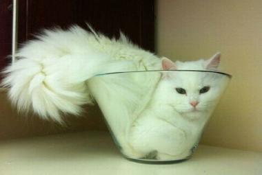 Jsou kočky tekuté? Proč mají starci dlouhé uši? Ig Nobelovy ceny znají vítěze