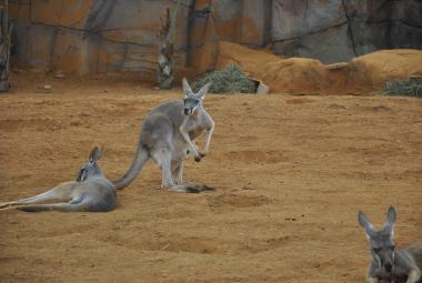 Studie: Austrálie zažije padesátistupňová vedra už v roce 2040