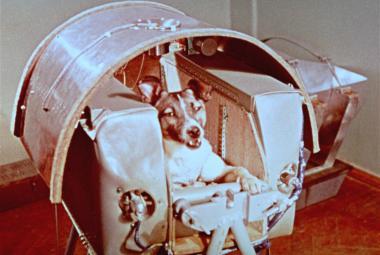 První zvíře na oběžné dráze: Lajka před 60 lety uhynula pár hodin po startu