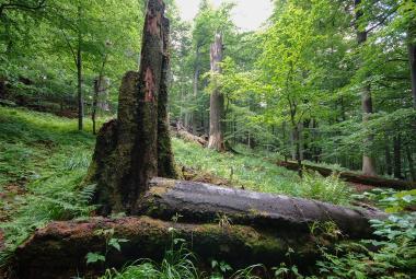 Beskydský prales Mionší budou bedlivě sledovat vědci. Stal se bezzásahovým územím