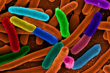 Lidstvo si vypěstovalo závislost na antibiotikách. Spotřeba děsivě roste, varuje studie
