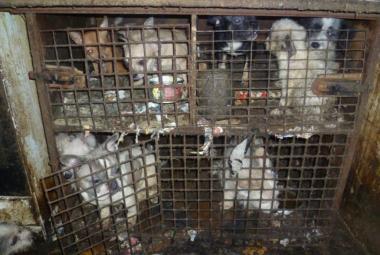 Psi v klecích v domě v Kamenici nad Lipou