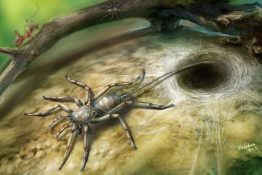 Pravěký pavouk měl ocas. Možná jde o chybějící článek, naznačuje výzkum