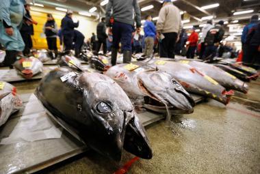 Trh s tuňáky v Japonsku