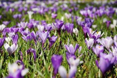 Není jaro jako jaro. To meteorologické už dávno začalo, další se přidá v úterý