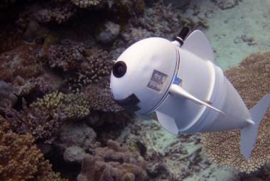 Robo-ryba vybavená umělou inteligencí pomůže s výzkumem korálových útesů
