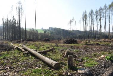 Současná kůrovcová kalamita už je prý nejhorší v historii českých zemí