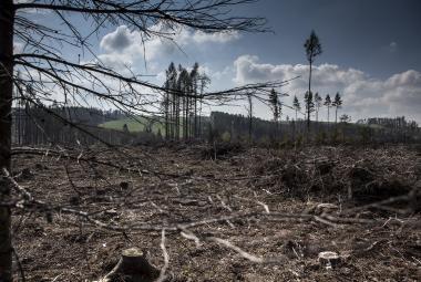Čím méně stromů, tím více sucha i povodní. České lesy jsou v kritickém stavu, varují experti