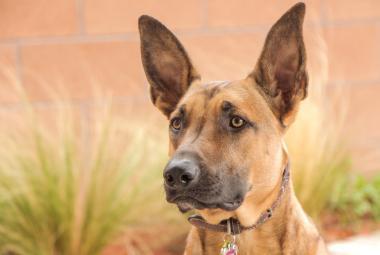 Lidé a psi mají nečekaně podobnou střevní zoo, ukázala studie. Bude se to hodit v dietologii