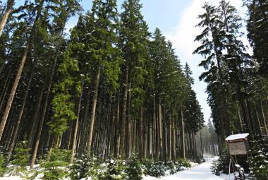 Žofínský prales pomůže NASA popsat evropské lesy. Je dokonale změřený