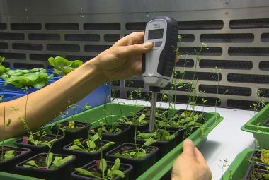 Měření rostlin pomocí speciálního přístroje
