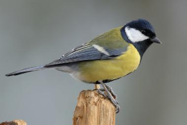 Reality show v chytrých ptačích budkách umožňuje sledovat, co se děje v hnízdě