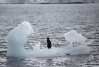 Led v Antarktidě taje rekordně rychle. Zvedá to hladiny oceánů, potvrzují vědci