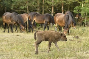 Velcí savci v české krajině