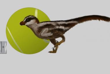 Vědci našli nejmenší dinosauří stopy na Zemi. Jejich tvůrce byl malý jako vrabec