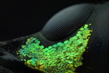 Nejlepší snímky světa viditelného jen pod mikroskopem: Lidská slza nebo kapka sršního jedu